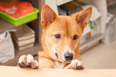 予防の重要性と、高齢ペットのケア